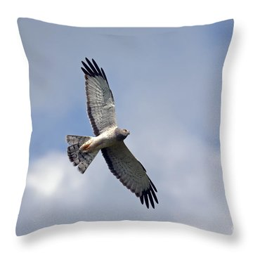 Flight Of The Harrier Throw Pillow by Mike  Dawson