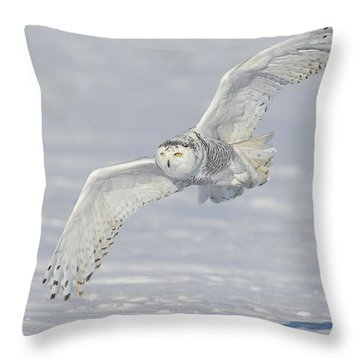 Flight Of The Snowy Throw Pillow