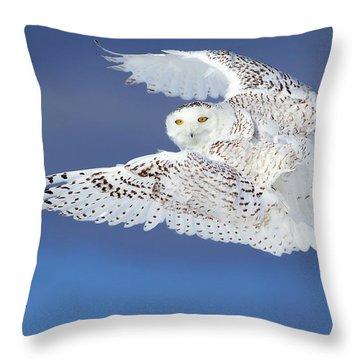 Cold Throw Pillows
