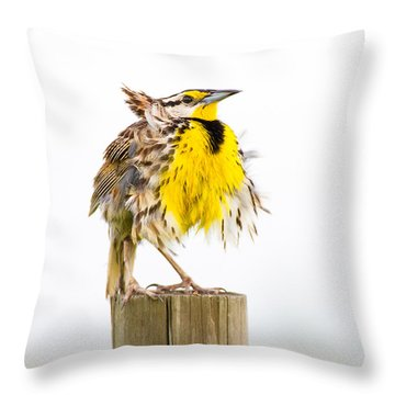 Flluffy Meadowlark Throw Pillow by Bill Swindaman