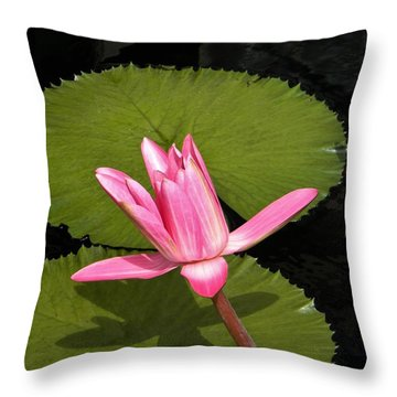 Floating Throw Pillow by Jean Goodwin Brooks