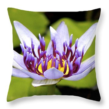 Throw Pillow featuring the photograph Floating Purple Waterlily by Lehua Pekelo-Stearns