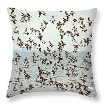 Flock Of Dunlin Throw Pillow by Karol Livote