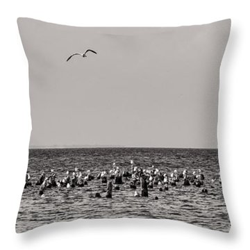 Flock Of Seagulls In Black And White Throw Pillow by Sebastian Musial