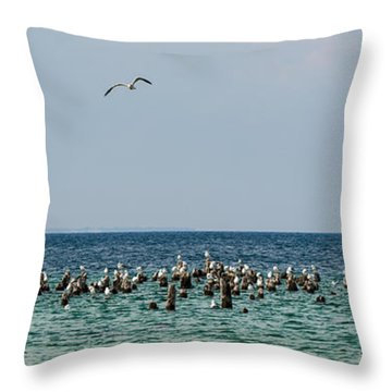 Flock Of Seagulls Throw Pillow by Sebastian Musial