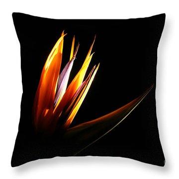 Flor Encendida Detalle Throw Pillow