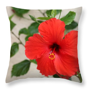 Floral Beauty  Throw Pillow by Christy Pooschke