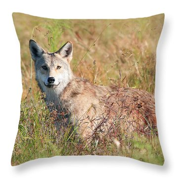 Florida Coyote In A Field Throw Pillow
