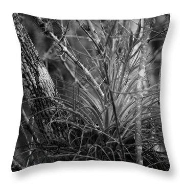 Florida Everglades Throw Pillow by Joseph G Holland