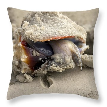 Throw Pillow featuring the photograph Florida Fighting Conch by Meg Rousher