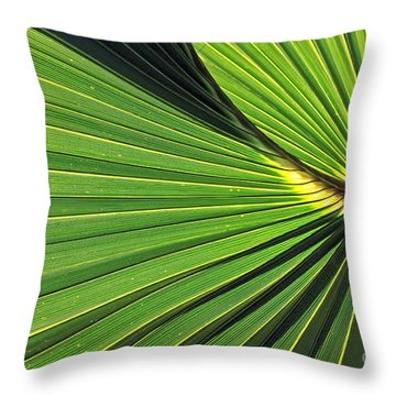 Florida Palm Frond Throw Pillow by Larry Nieland