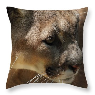 Throw Pillow featuring the photograph Florida Panther by Meg Rousher
