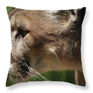 Throw Pillow featuring the photograph Florida Panther Profile by Meg Rousher
