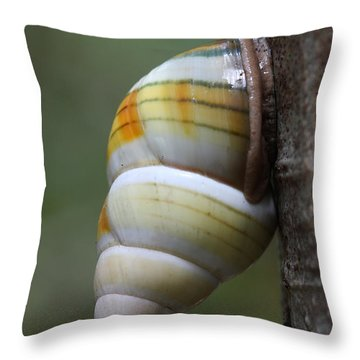 Throw Pillow featuring the photograph Florida Tree Snail by Paul Rebmann