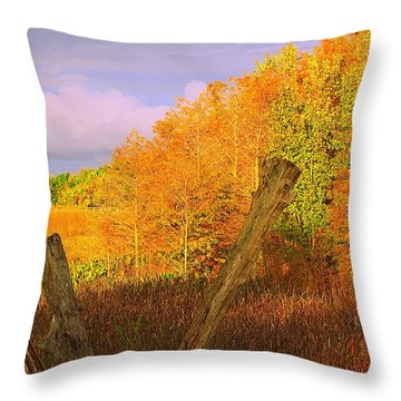 Florida Wetlands  Throw Pillow by David Mckinney
