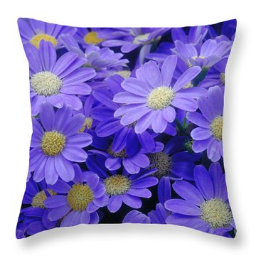 Florists Cineraria Hybrid Throw Pillow by Geoff Bryant