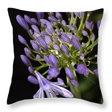 Flower- Agapanthus-blue-buds-one-flower Throw Pillow by Joy Watson