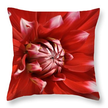 Flower- Dahlia-red-white Throw Pillow