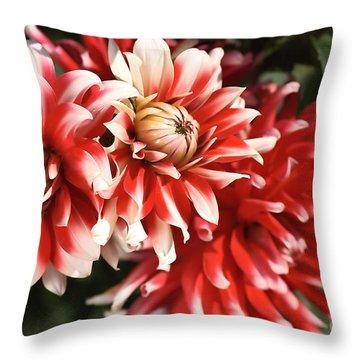 Flower-dahlia-red-white-trio Throw Pillow by Joy Watson