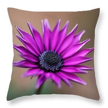 Flower-daisy-purple Throw Pillow