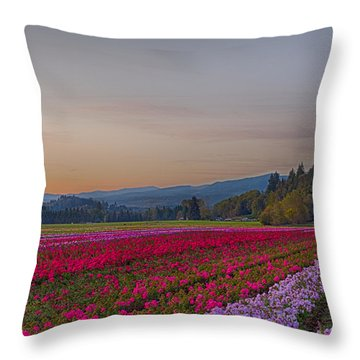Flower Field At Sunset In A Standard Ratio Throw Pillow