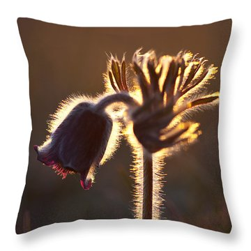 Flower In Back Light Throw Pillow