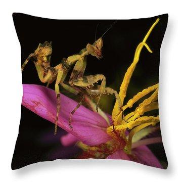 Flower Mantis Nymph Throw Pillow by Mark Moffett