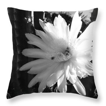 Throw Pillow featuring the photograph Flowering Cactus 1 Bw by Mariusz Kula