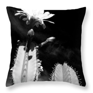 Throw Pillow featuring the photograph Flowering Cactus 2 Bw by Mariusz Kula