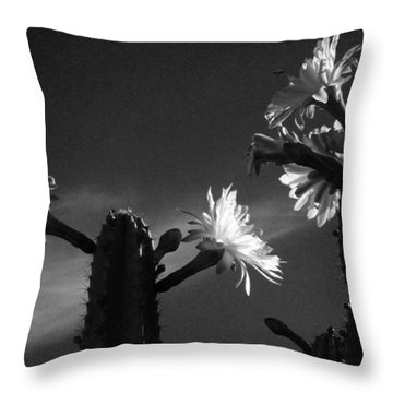 Throw Pillow featuring the photograph Flowering Cactus 4 Bw by Mariusz Kula
