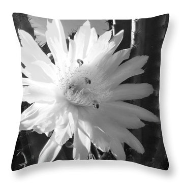 Throw Pillow featuring the photograph Flowering Cactus 5 Bw by Mariusz Kula