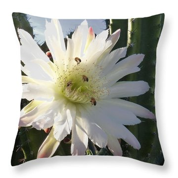 Throw Pillow featuring the photograph Flowering Cactus 5 by Mariusz Kula