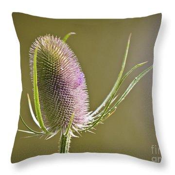 Flowering Teasel. Throw Pillow