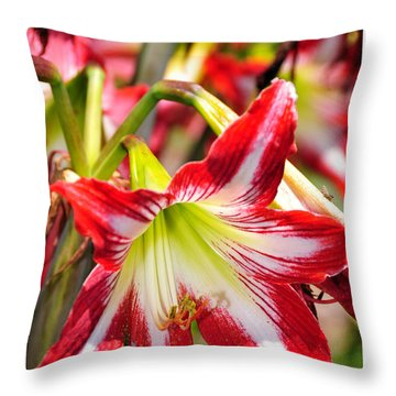 Throw Pillow featuring the photograph Flowers In The Summer by Davina Washington