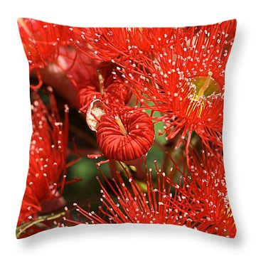 Flowers-red Eucalyptus-australian Native Flora Throw Pillow by Joy Watson