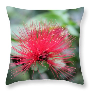 Fluffy Pink Flower Throw Pillow by Sergey Lukashin