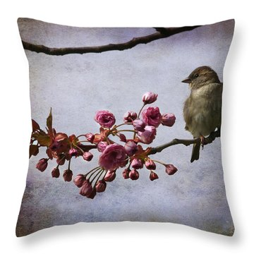 Fluffy Sparrow  Throw Pillow by Barbara Orenya