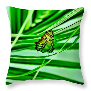 Flutter By Throw Pillow