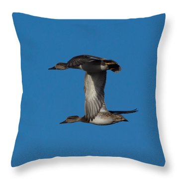 Designs Similar to Fly By 2 by Ernie Echols