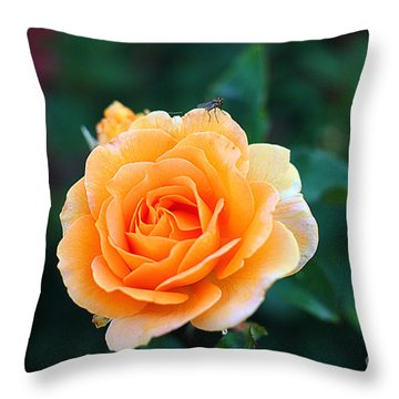 Fly On A Rose Throw Pillow