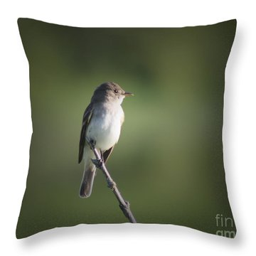 Throw Pillow featuring the photograph Flycatcher In Meditation by Anita Oakley