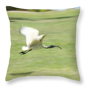 Flying Ibis Throw Pillow