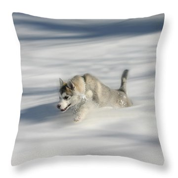 Flying In A Husky Dream Throw Pillow