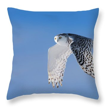 Snowy Owls Throw Pillows