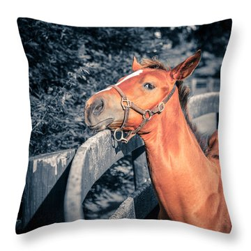 Foal By The Fence Throw Pillow