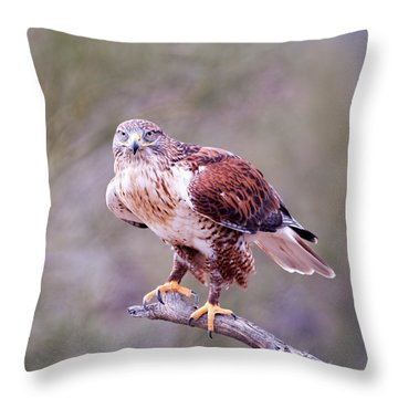 Throw Pillow featuring the photograph Focus by Dan McManus