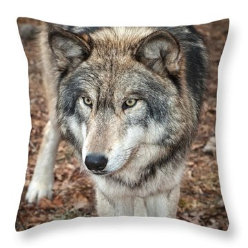 Throw Pillow featuring the photograph Focused by Gary Slawsky