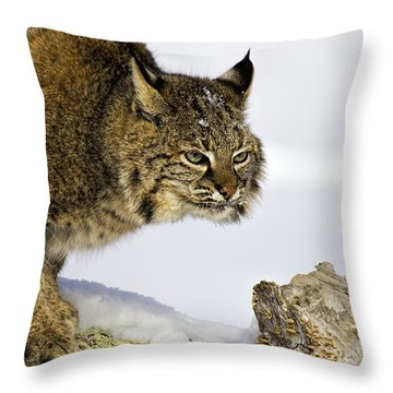 Focusing Throw Pillow by Jack Milchanowski