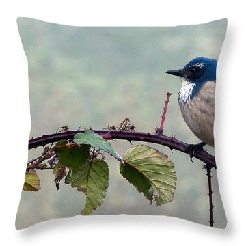 Fog Bound Jay Throw Pillow