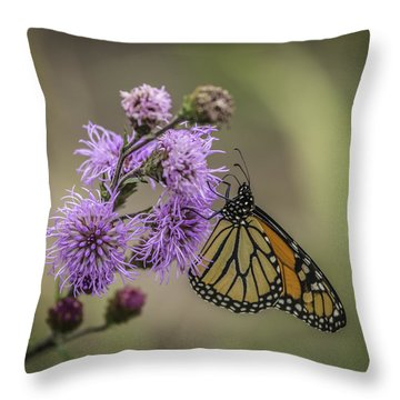 Foggy Morning Monarch Throw Pillow